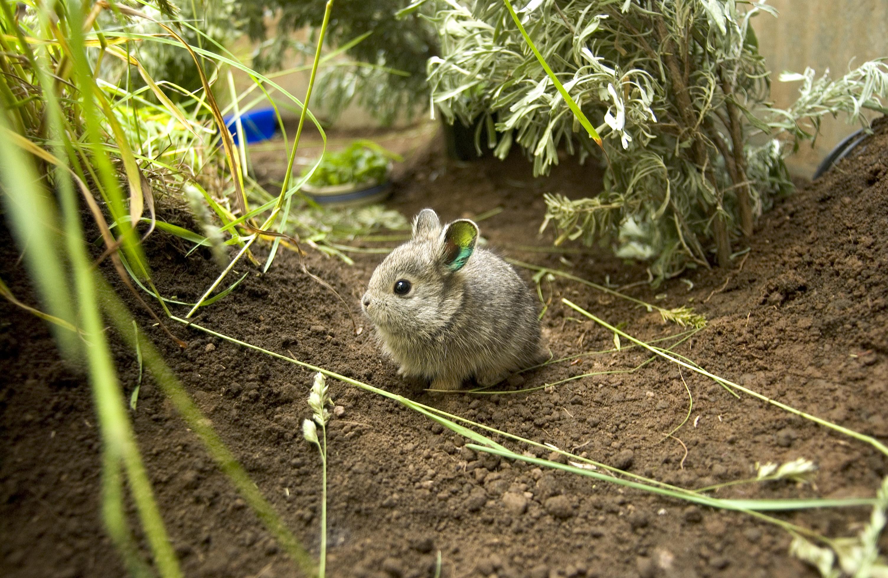 wild rabbit babies