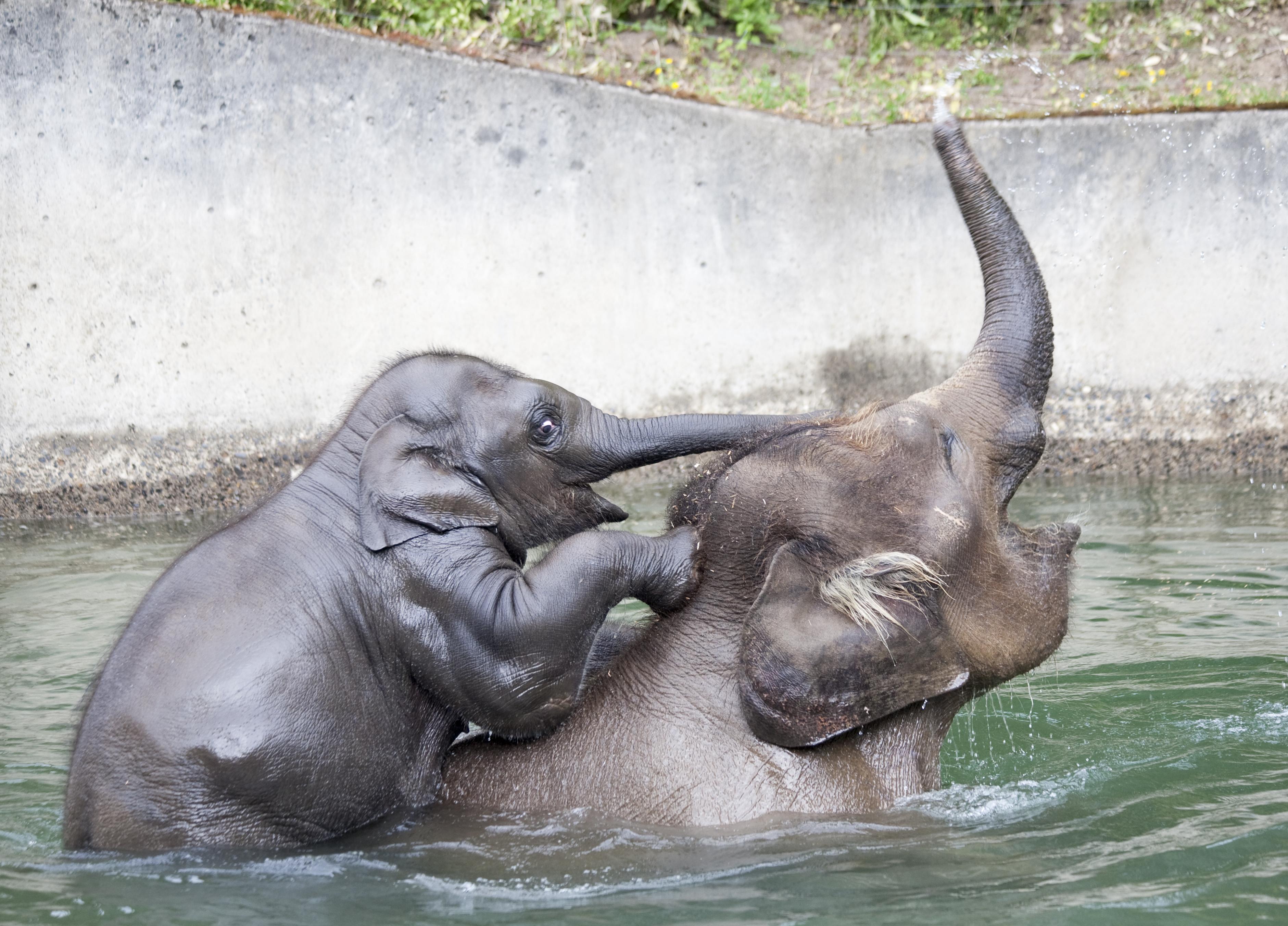 Samudra Oregon Zoo