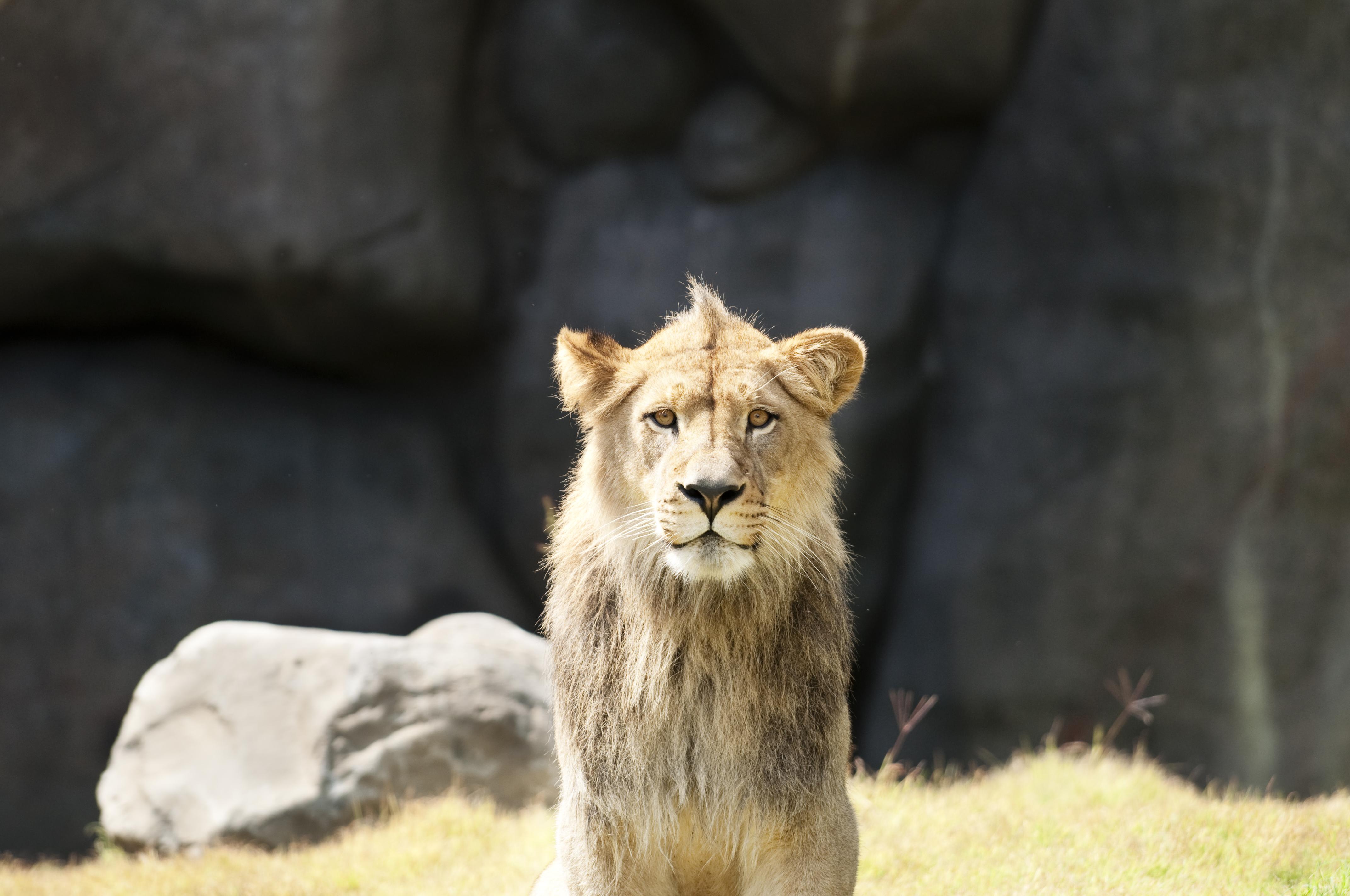 Zawadi Mungu | Oregon Zoo