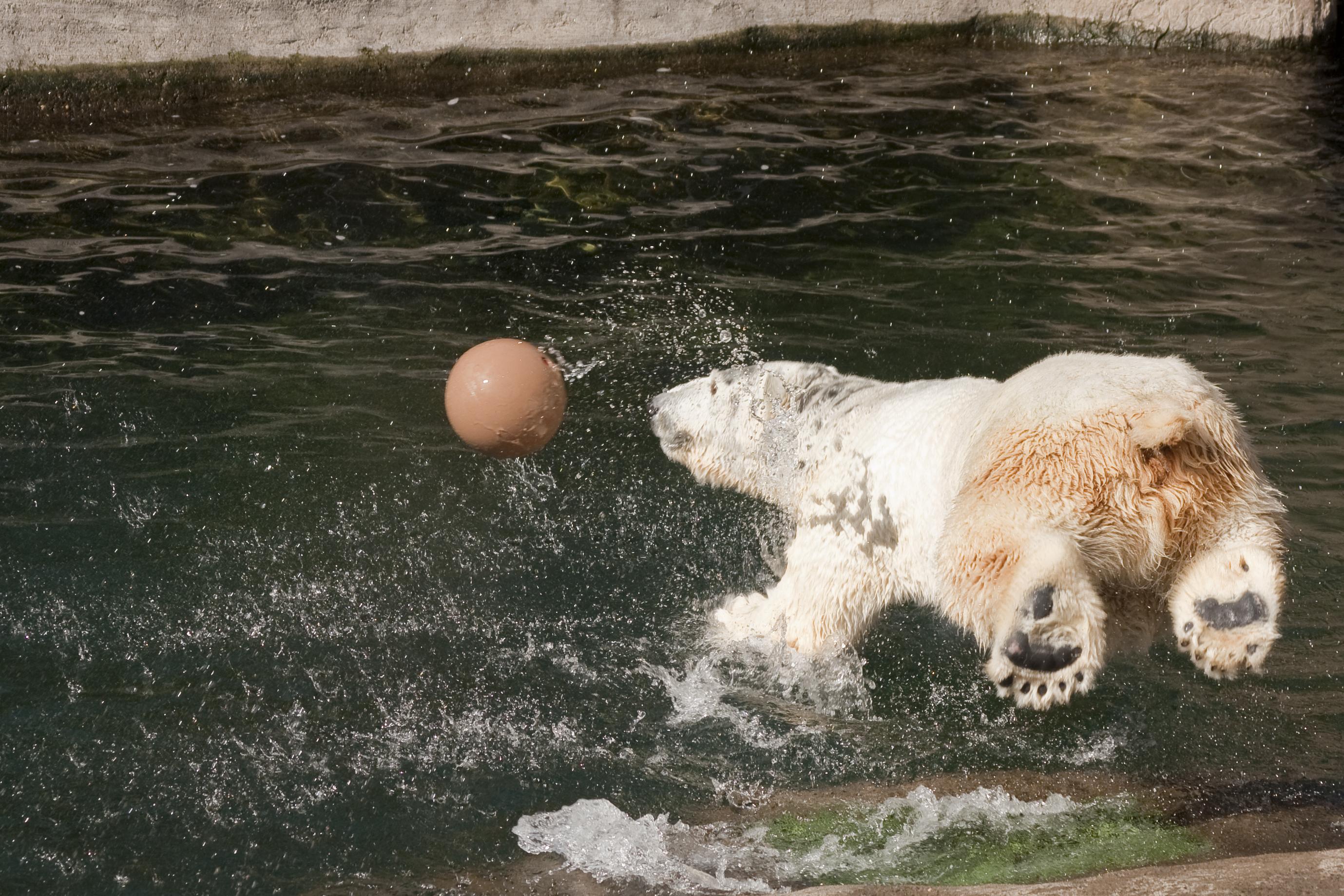 Tasul Oregon Zoo