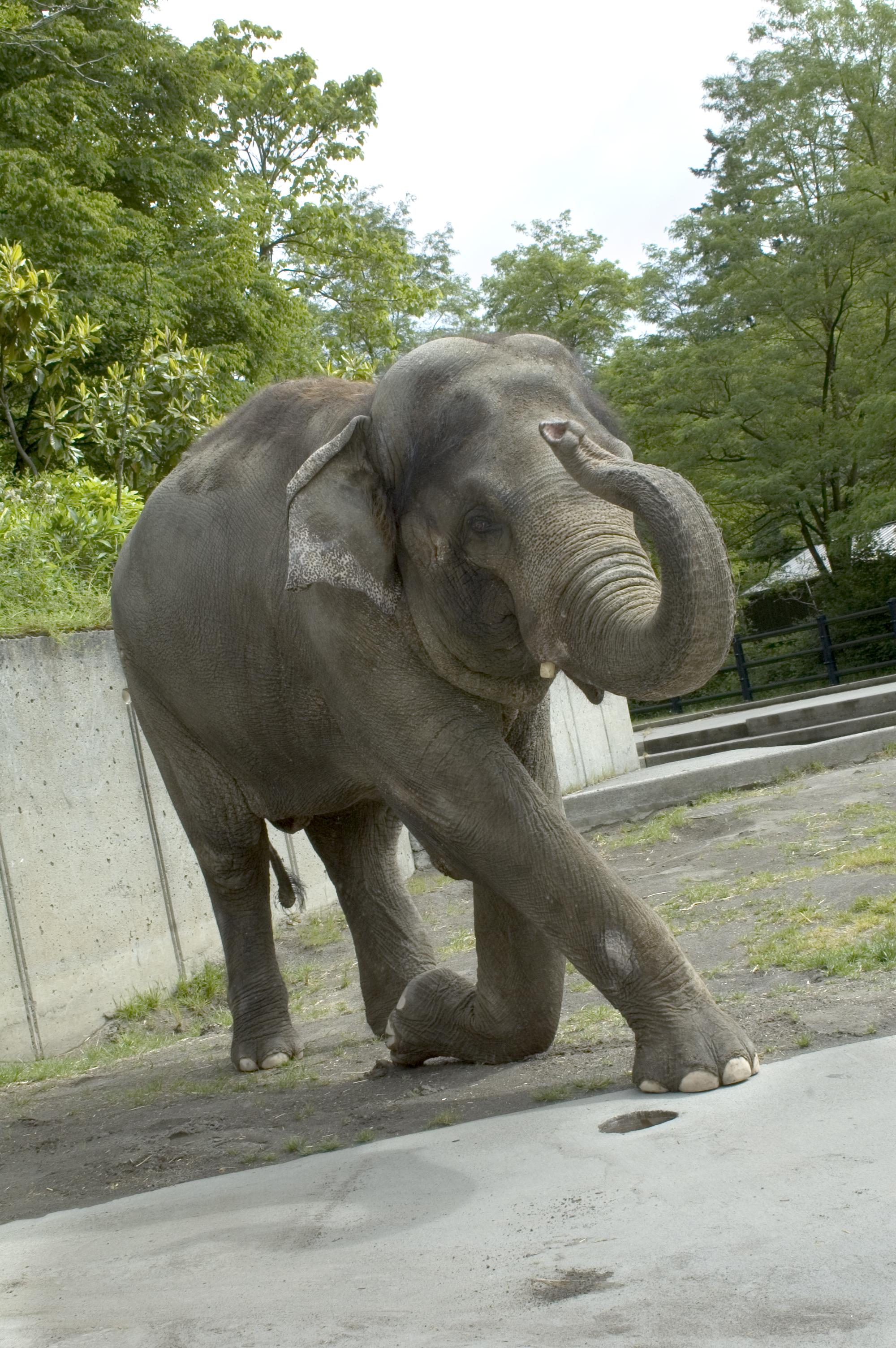Rama   Oregon Zoo