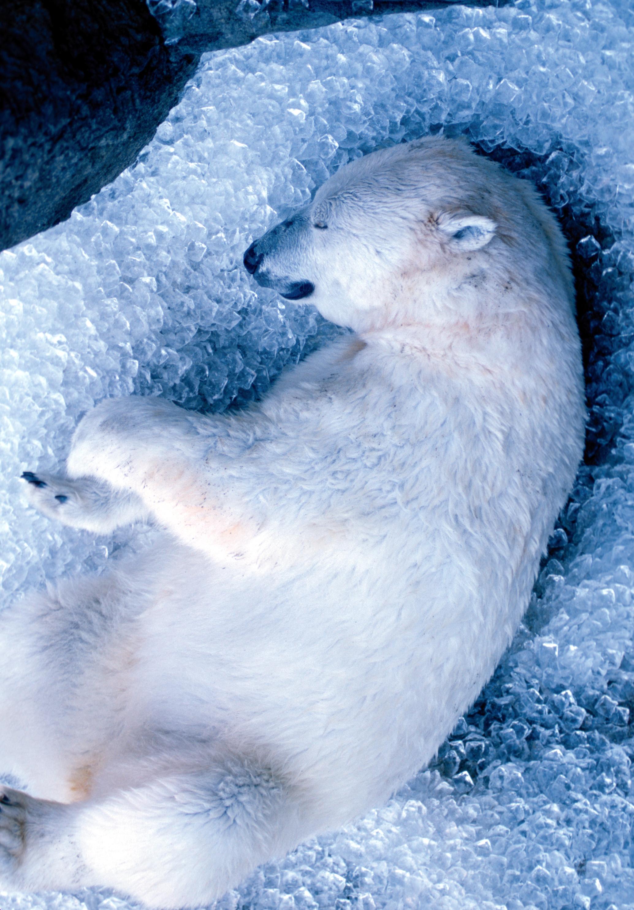 Sleeping Oregon Zoo