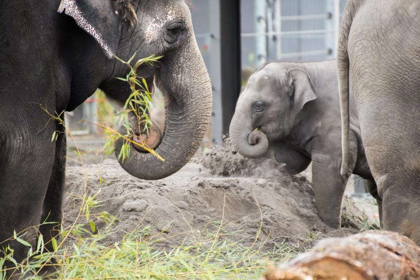 True grit: Zoo searches world for perfect \'elephant sand\' | Oregon Zoo