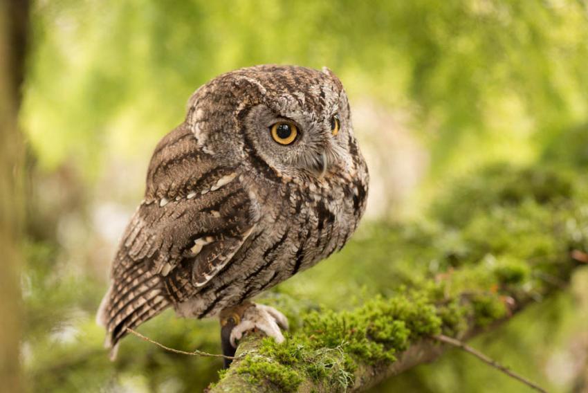 Snowy Owl in Portland, Oregon -- 13 December 2014 - YouTube  Owls Portland Oregon