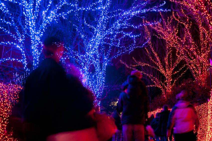 Members are invited to a special members-only preview night on Wednesday,  November 22. Be the first to view the Oregon Zoo's annual winter festival,  ... - ZooLights Member Preview Night Oregon Zoo