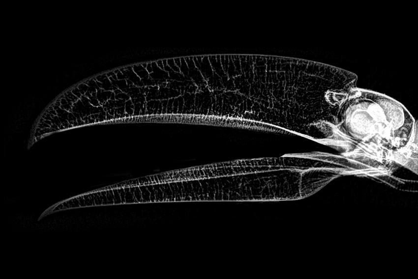 Посмотрите на необычные рентгеновские снимки животных. Они немного пугают