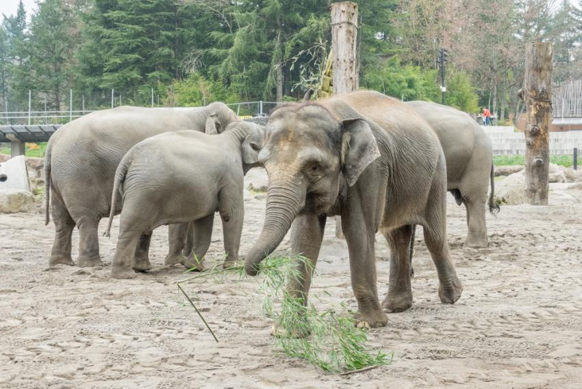 Director S Statement On Misinformation In Anti Zoo Campaign Oregon Zoo