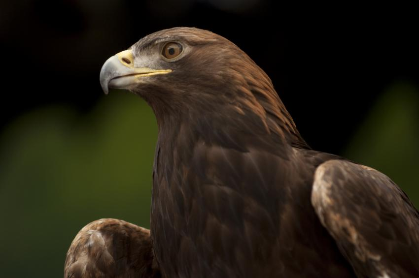 The Oregon Zoo will mark Veterans Day by offering free admission for military  veterans and active military personnel 1f73f9746