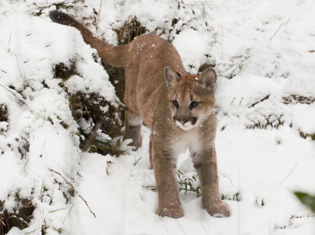 Citaten Winter Zoo : Winter oregon zoo
