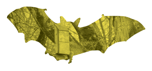 Learn How To Build A Bat Box And Find More Ways Help Bats