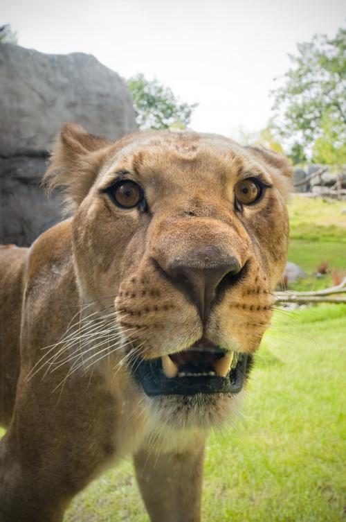 Oregon Zoo: Explore Gallery