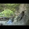 River otter: Video news release