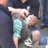 Condor health checkup