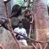 Career Profile: Zookeeper